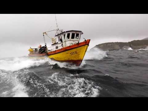 L/M fanny  navegando en guafo  puntilla chip