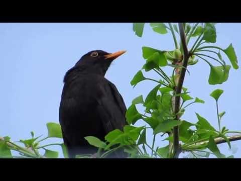 Birdsongs Nr. 2 Vogelgesänge Nr.2
