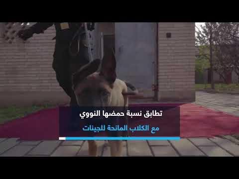 قد تبدو تلك الكلاب البوليسية طبيعية لكنها في حقيقة الا?مر غير ذلك !  - نشر قبل 2 ساعة