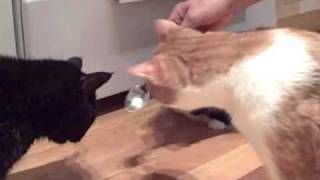 Hermia, Jack, and Betsy share a spoonful of cat food