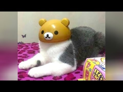 COLLECTION of the BEST CAT VIDEOS - You will LAUGH EXTREMELY HARD!
