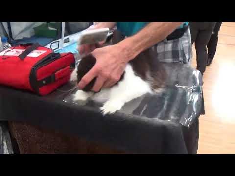 parts of TCCF cat show.