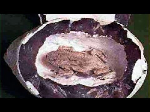 Mysterious fossils You Won't Believe Exist