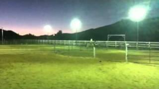 Hot Blonde Cattle Sorting