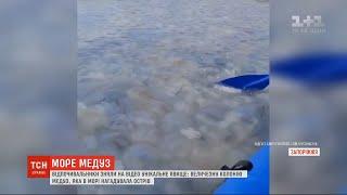 Острів з медуз у Бердянську відпочивальники зафільмували аномальне явище