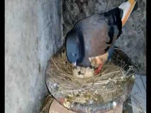 Cara Burung Memberi Makan Anaknya Subhanallah Youtube