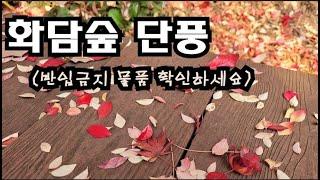 화담숲 단풍구경 /서울근교 곤지암 가볼만한 곳 / 가을…