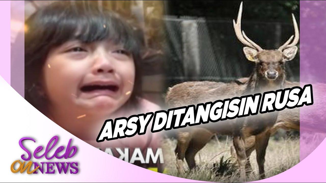 Gara-Gara Rusa, Arsy Tiba-Tiba Nangis, Kenapa Ya?? – SELEB ON NEWS 07/08