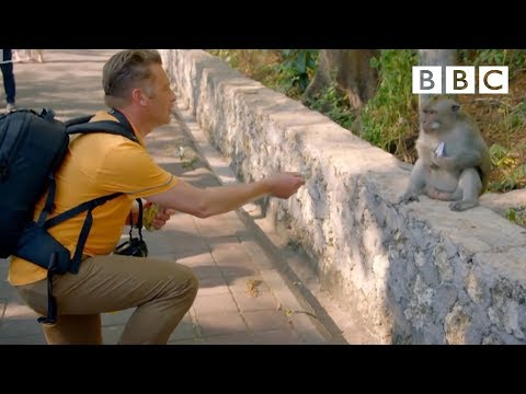 Thumbnail: Why are these monkeys stealing from tourists? - World's Sneakiest Animals: Episode 2 Preview - BBC
