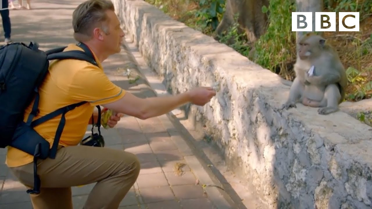 Why do monkeys steal from tourists? - World's Sneakiest Animals: Episode 2 Preview - BBC
