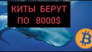 БИТКОИН: КИТЫ СКУПАЮТ BTC ПО 8000$. ЧТО СКРЫВАЮТ Bitcoin –МИЛЛИОНЕРЫ? ТАКТИКА BTC – КИТОВ!