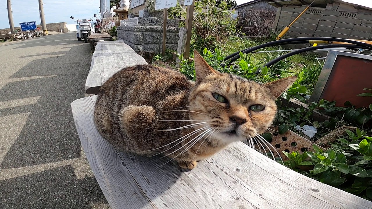 猫の島に着いてすぐに出会った野良猫をナデナデした