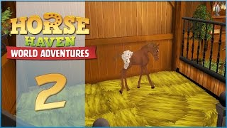 Horse Haven || Birth of a Baby Appaloosa! - Episode #2