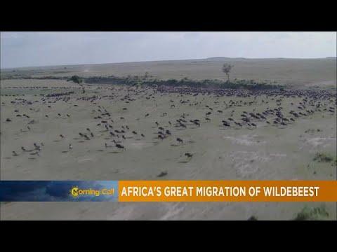 Tanzania: Leading Safari destination