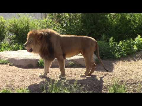 Columbus Zoo Heart of Africa