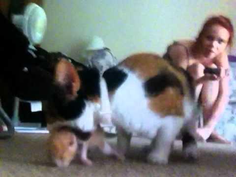 kitty :33333