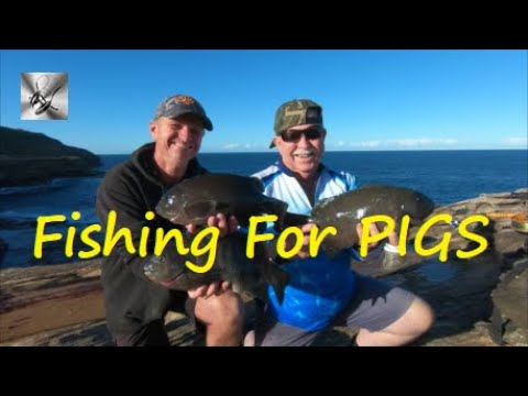 FISHING FOR PIGS | Fishing & Cooking