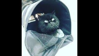 В Твери спасли бездомного слепого кота