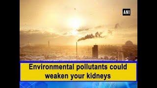 Environmental pollutants could weaken your kidneys - #Health News