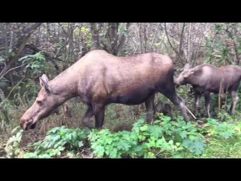 Best of Anchorage Alaska 2016