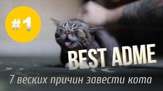 7 веских причин завести кота [Лучшие видео ADME]