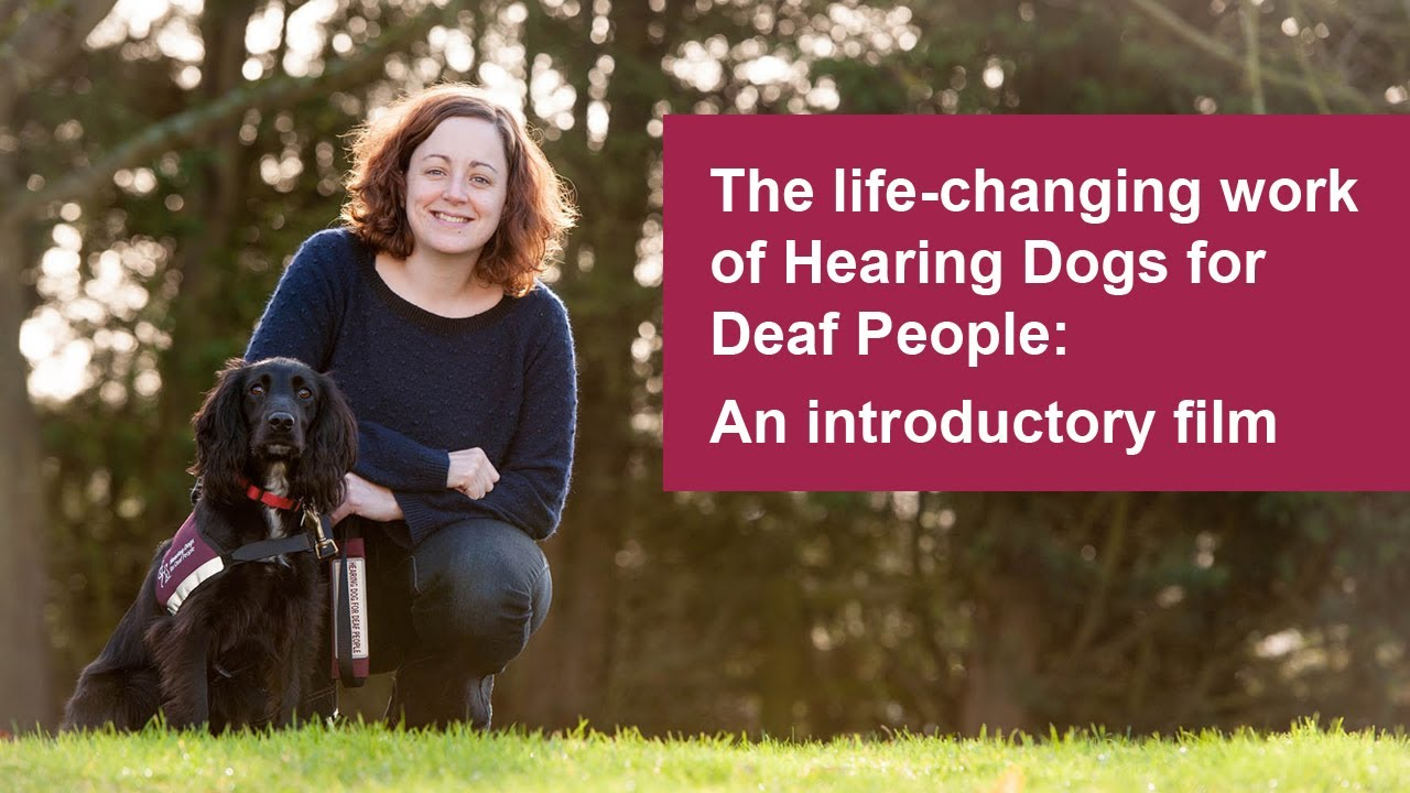 The Life Changing Work Of Hearing Dogs For Deaf People