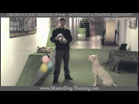 Obedience Dog Training DVD #3 - Motivation & Training Equipment