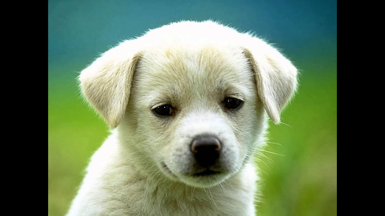 fotos de cachorro  youtube