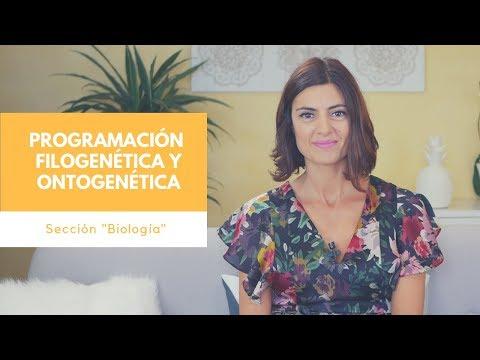 Programación Filogenética y Ontogenética