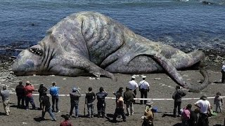 10 Giant Animals in the world