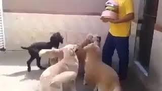 Дрессированные собаки