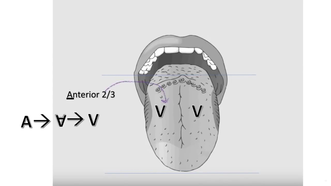 Tongue Innervation - YouTube