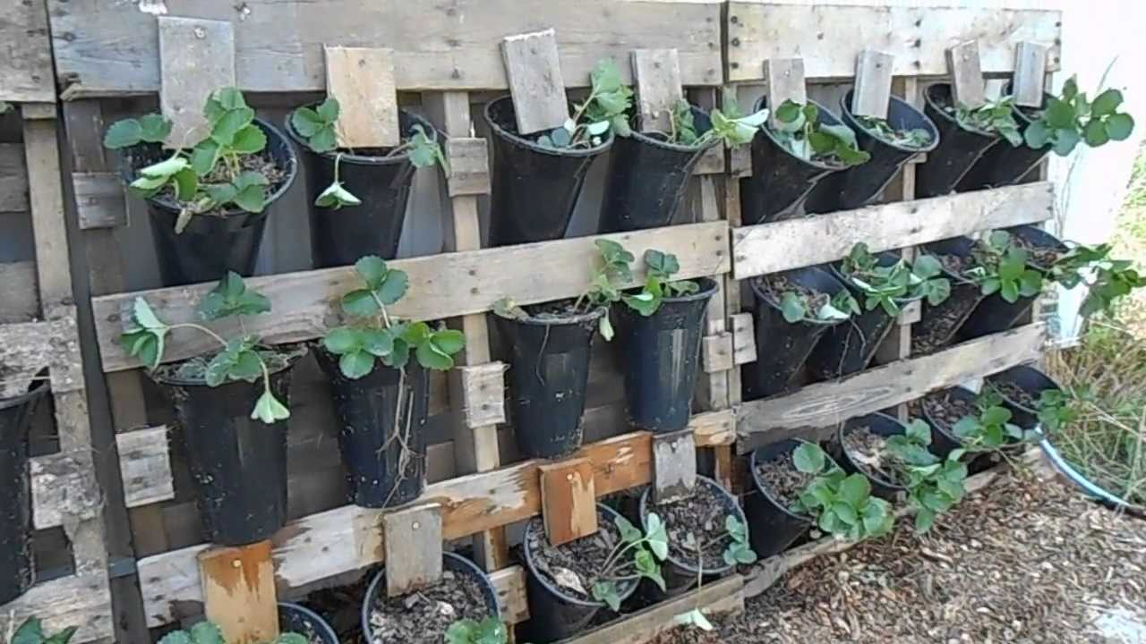 Liberty Garden Strawberries In Pallets Youtube