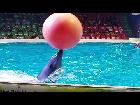 Part 4   Dubai Dolphinarium – Dolphin and Seal Show