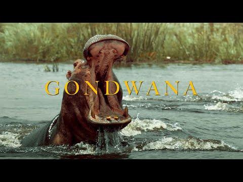Namibia 2020 : Gondwana - The Real Wild Life