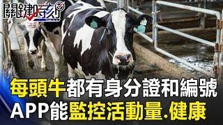 每頭牛都有身分證和編號 手機APP就能隨時監控活動量和健康! 關鍵時刻20181130-3 黃世聰