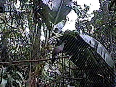 Costa Rica Zoo 3