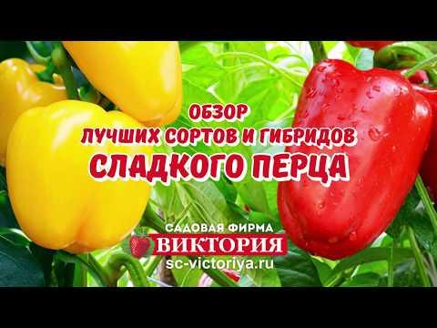 Лучшие сорта сладкого перца | фаршированный | огромный | цветной | сладкий | красный | желтый | перец | прец | к