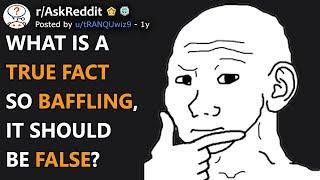 What Is A True Fact So Baffling, It Should Be False? (r/AskReddit)