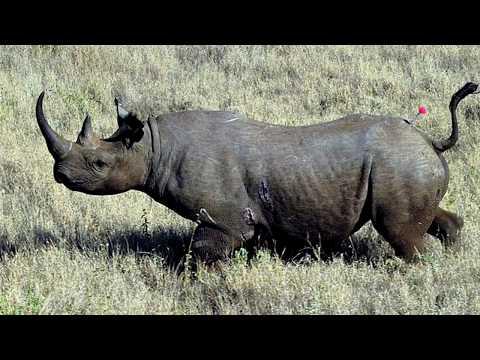 17 recently extinct animals youtube