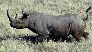 17 Recently Extinct Animals