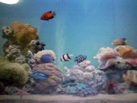 Virtual marine aquarium