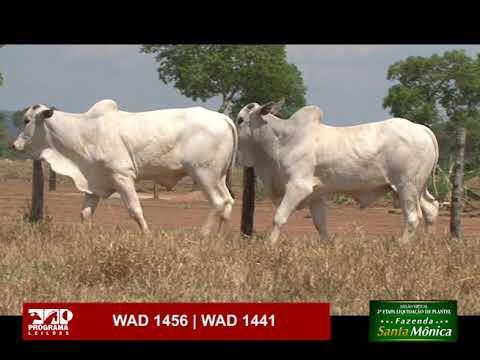 LOTE 50 - WAD 1456 | WAD 1441