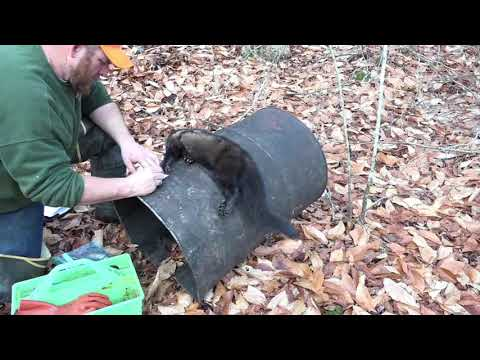 Fur Life TV 2018 - Episode 11 - Marten Trapping