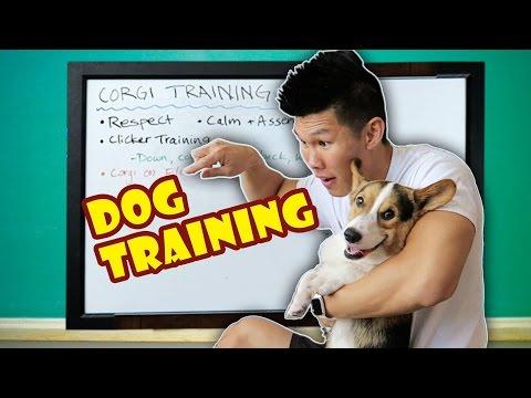HOW TO CLICKER TRAIN A DOG | TEACHING a CORGI the DO's & DON'Ts