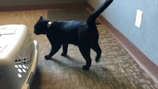 Black Cat Hoping For Good Luck In New Home