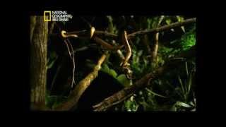 الصقر صائد القرود وحيوانات الغابات الصيد الافتراس