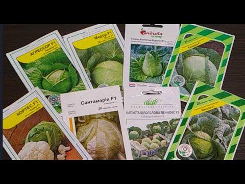 Сорта капусты ранней, поздней и цветной - что буду сеять в новом огородном сезоне