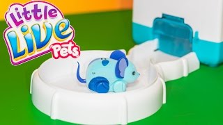 LITTLE LIVE PETS  Lil Mouse House a Little Live Pets Video Toys Video  Review