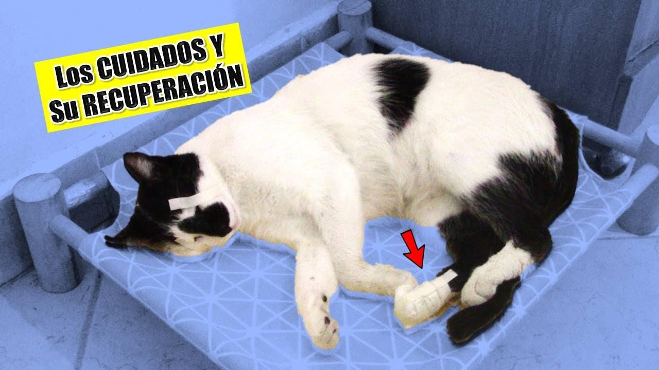 La Operación del Pie de mi Gata Pandita    |    Adry y sus DivertiCats